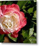 Rose Ruffles Metal Print