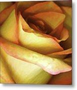 Rose Scan Softened Metal Print