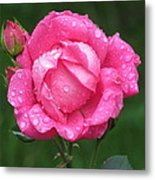 Rose Showers Metal Print