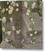 Rose Sprawling On Stone Metal Print