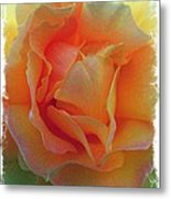 Rose Taken At Sunset  Metal Print