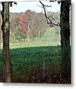 Rose Tinged Trees Metal Print