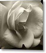 Rose White Metal Print