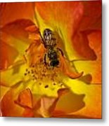 Rose With Bee Metal Print