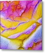 Rose With Dew Drops In Candy Colors Metal Print