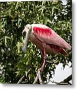 Roseate Spoonbill  What Are You Looking At 2 Metal Print