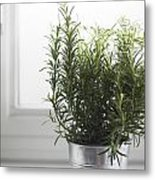 Rosemary In Metal Pot Metal Print