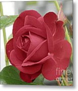 Roses Are Red Metal Print by Margaret McDermott