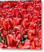 Tulips At The Plaza Hotel Metal Print