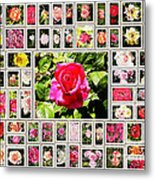 Roses Collage 2 - Painted Metal Print by Stefano Senise