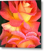 Roses Of Many Colors Metal Print