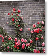 Roses On Brick Wall Metal Print by Elena Elisseeva