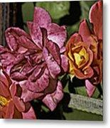 Roses On Trellis Metal Print