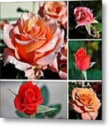 Roses Roses Roses I Thank All The Roses Metal Print