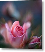 Roses Scented Dream Metal Print by Mike Reid