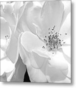Roses Soft Petals In Black And White Metal Print