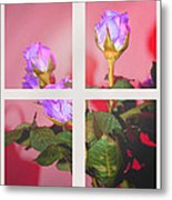 Roses Through The Window Metal Print