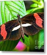 Rosina Butterfly Metal Print