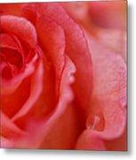 Roslyn's Rose Metal Print