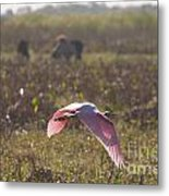 Rosy In The Field Metal Print