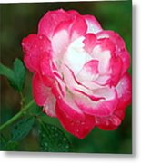 Rosy Reds And Whites Metal Print