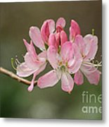 Rosy Rhododendron Metal Print