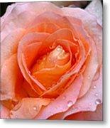 Rosy Rose Metal Print