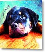 Rottie Puppy By Sharon Cummings Metal Print by Sharon Cummings