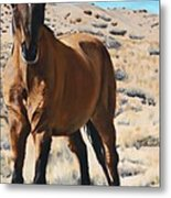 Rough And Ready Metal Print
