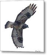 Rough-legged Hawk In Flight-signed-#4318 Metal Print