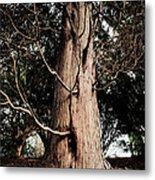 Roukenglentree Metal Print