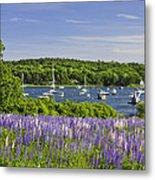 Round Pond Lupine Flowers On The Coast Of Maine Metal Print
