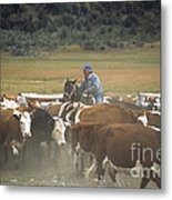 Cattle Round Up Patagonia Metal Print