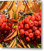 Rowan Berry Metal Print