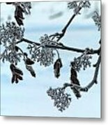 Rowan In Winter Metal Print