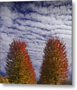 Rows Of Red Autumn Trees With Cirus Clouds Metal Print