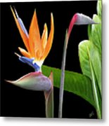 Royal Beauty II - Bird Of Paradise Metal Print by Ben and Raisa Gertsberg