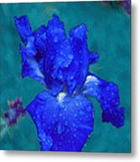 Royal Blue Iris Metal Print