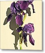 Royal Purple Iris Still Life Metal Print