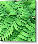 Royal Fern  Frond Detail Metal Print