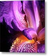 Royal Iris Metal Print
