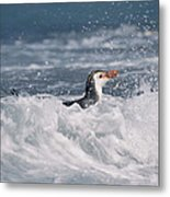 Royal Penguin Swimming In Surf Metal Print