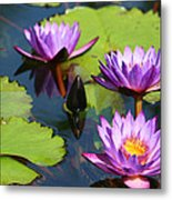 Royal Purple Water Lilies Metal Print