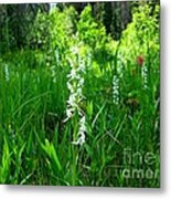 Royal Rain Orchid Metal Print