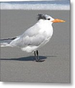 Royal Tern Seafoam Metal Print