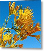 Rubber Rabbitbrush Off Hole-in-the-rock Road In Grand Staircase Escalante National Monument-utah Metal Print
