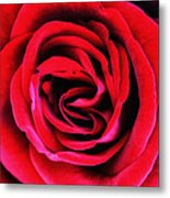 Rubellite Rose Palm Springs Metal Print