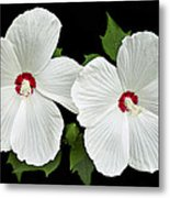 Ruby Dot Hibiscus Metal Print