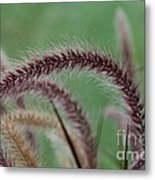 Ruby Fingers Metal Print