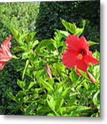 Ruby Red Hibiscus  Metal Print
